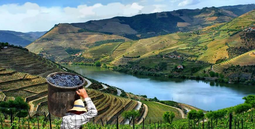 Portugal Wine Region Tour